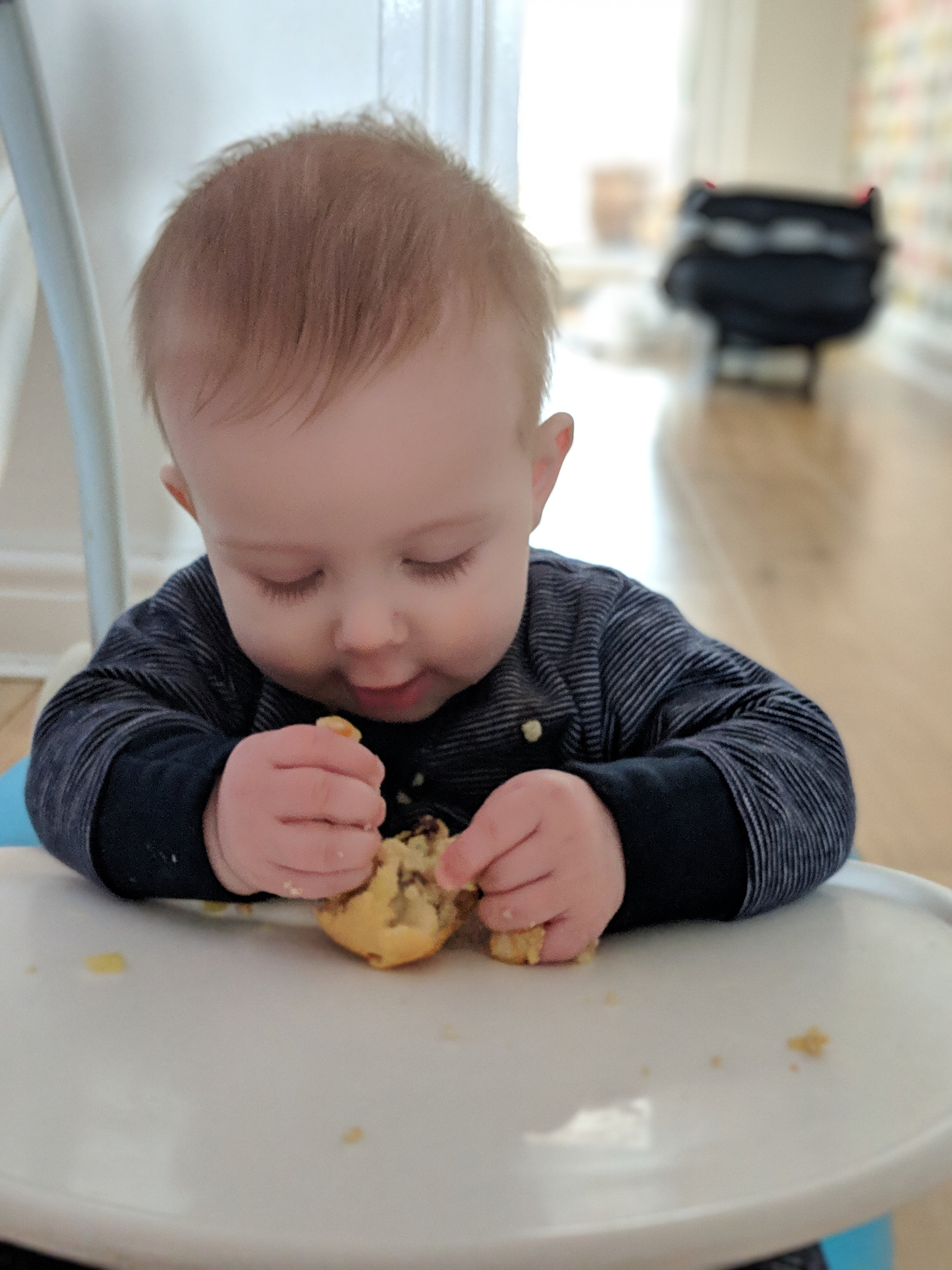 baby eating BLW muffin in high chair